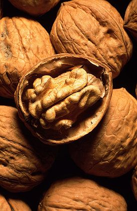 Walnuts resemble the human brain